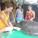 Volunteers at a leatherback turtle hatchery in Costa Rica